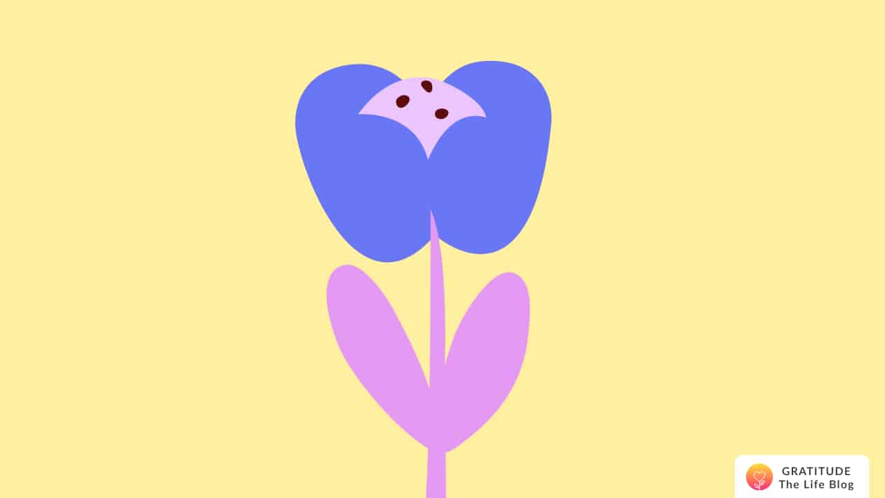 Illustration of a blue and pink flower