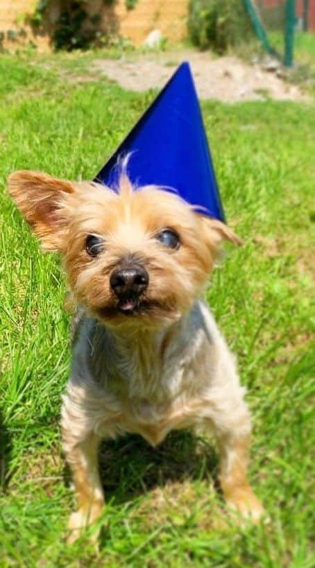 A photo of Asli's dog, Bailey