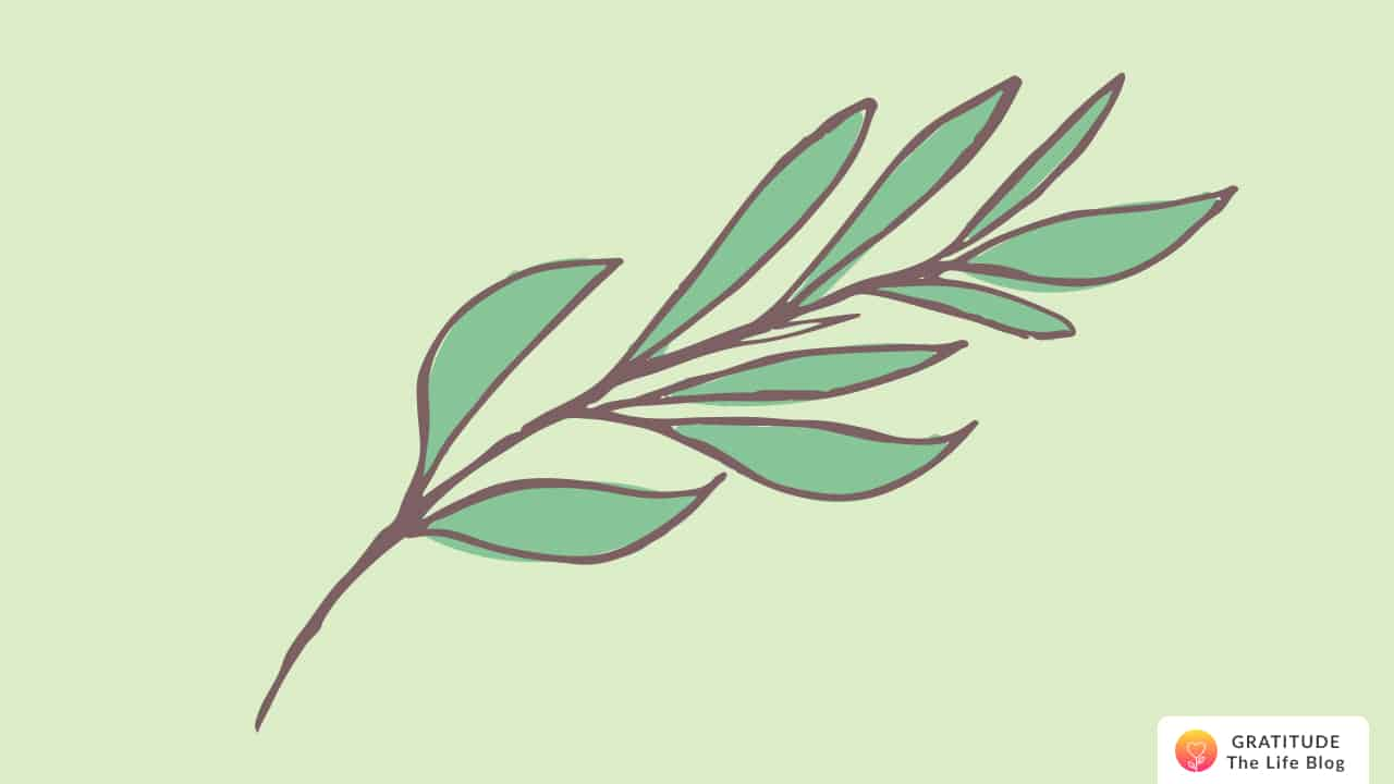 Illustration of a leaf stem with thin leaves