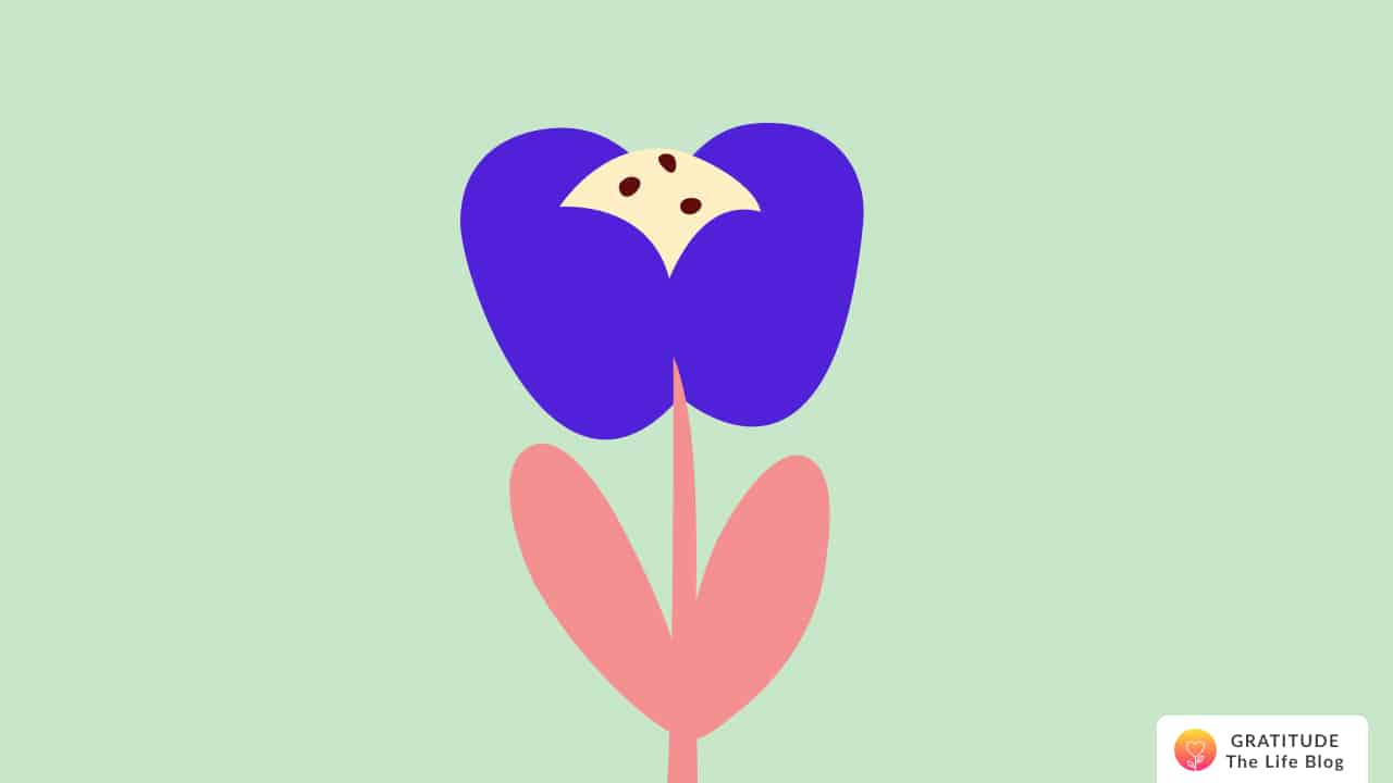 Illustration of a blue, yellow, and pink flower
